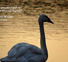 The Greatest Gift by Maria P Urso