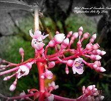 Wild Flower by mubadalashan