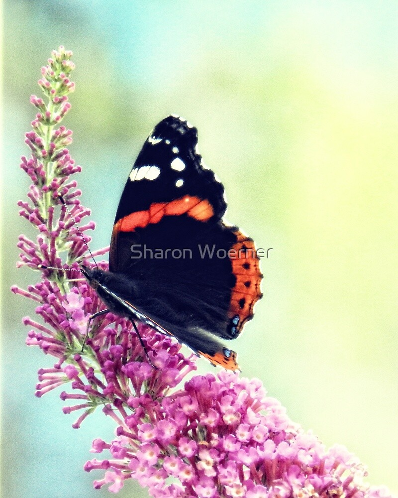 Double Butterfly by Sharon Woerner