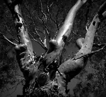 Scary Tree- Bremer Valley by Ben Loveday
