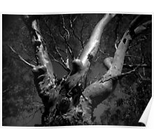 Scary Tree- Bremer Valley Poster