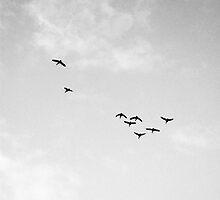 Taking Flight by RecklessShalala