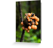 Funky Fungus Greeting Card