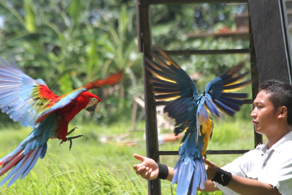 Man and Macaw by byronbackyard