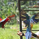 Man and Macaw by byronbackyard
