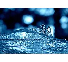 Ice Forest Photographic Print
