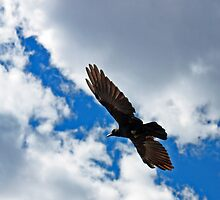 Raven in the Clouds by Daniel Owens