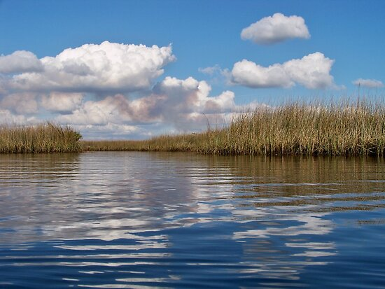 Sawgrass Water and clouds by William  Boyer