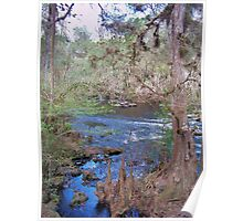 Hillsborourgh River State Park, River Poster