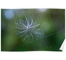 Seed Stuck on a Spider Web Poster