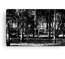 Afternoon Shadows in the Bush Canvas Print
