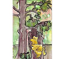 Trees with Yellow Fungus Photographic Print