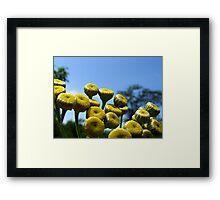 Tansy Framed Print