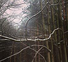 Snow on branch by Robert Steadman
