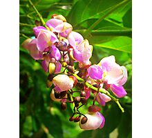 Cute Blossom Flowers Photographic Print