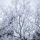 Frosted Tree by MorganaPhoto