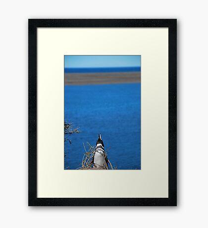 Penguin calling Framed Print