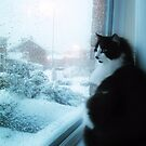 Watching The Snow by vic321