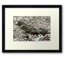 Baby Water Dragons Emerging Framed Print