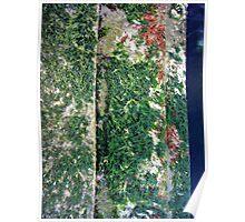 seaweed step Poster