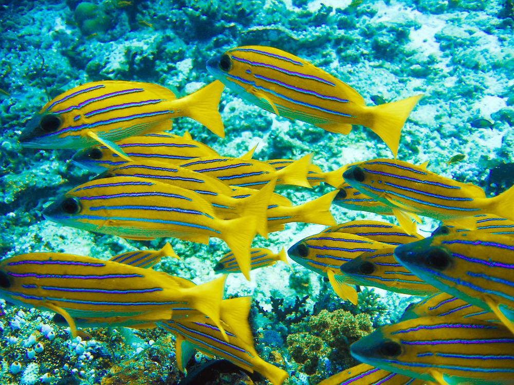 Reef fish  by simon17