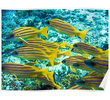 Reef fish  Poster