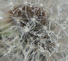 Dandelion with water by SherlockReader1