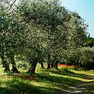Orchard in Provence France by KSKphotography