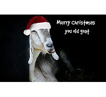 Merry Christmas You Old Goat Photographic Print