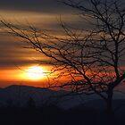 Winter Sunset Silhouette by Gene Walls