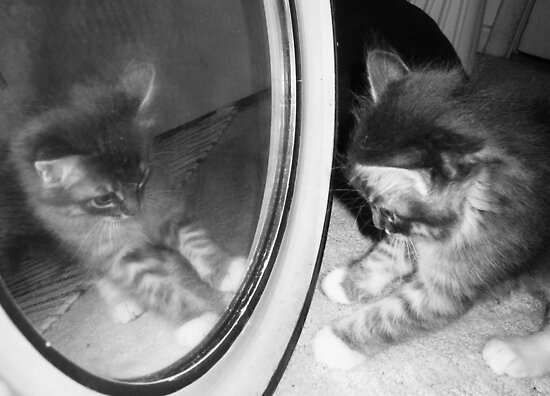 Kitten finds Mirror by PirateAssassin
