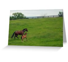Where's the herd ?  Greeting Card
