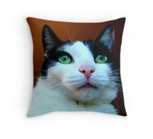 Catitude with Bratitude  Throw Pillow