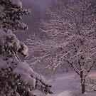Winter Evening by Sharlene Rens