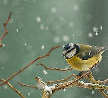 snowstorm survivor by Steve Shand