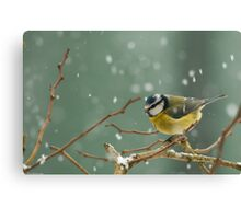 snowstorm survivor Canvas Print