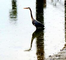 reflections of a blue heron~ by Brandi Burdick
