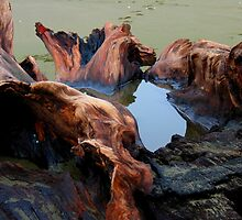 redwood snag by Alex Call