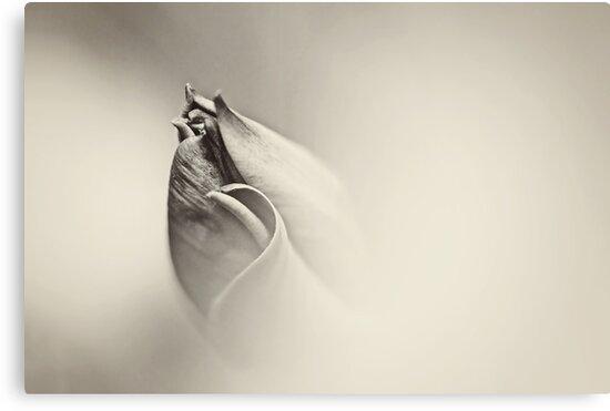 Awakening by Lars Basinski