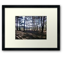 Sun in the Trees Framed Print
