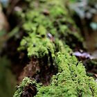 Mossy Log at Cape Tribulation by styles