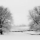 Snowy Twins by SwampDogPhoto