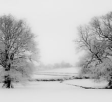 Snowy Twins by SwampDogPhoto