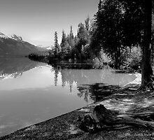 Shoreline by Lucinda Walter