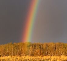 Fall Rainbow by Kathi Huff