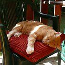 Cafe Cat: Queensland, Australia by linfranca