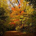 A colorful tree on my way by Jocelyne Choquette