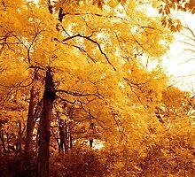 A golden tree on my way by Jocelyne Choquette