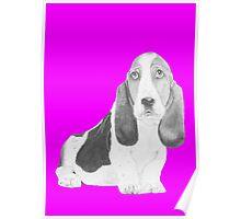 Bassett Hound Puppy in Pink Poster