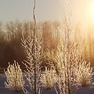Icy Trees by Kathi Arnell